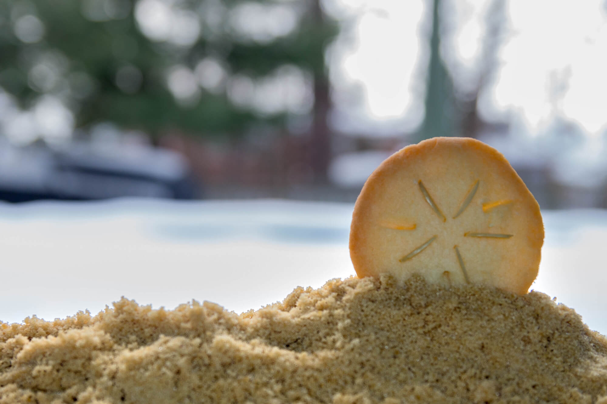 Scuba Diving Sand Dollar Cookie At Christmas Time In Canada