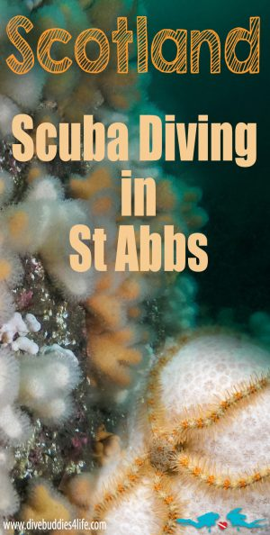 Scuba Diving In St Abbs, Scotland, UK