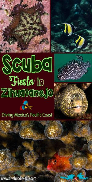 Scuba Fiesta In Zihuatanejo, Mexico's Pacific Coast Pinterest