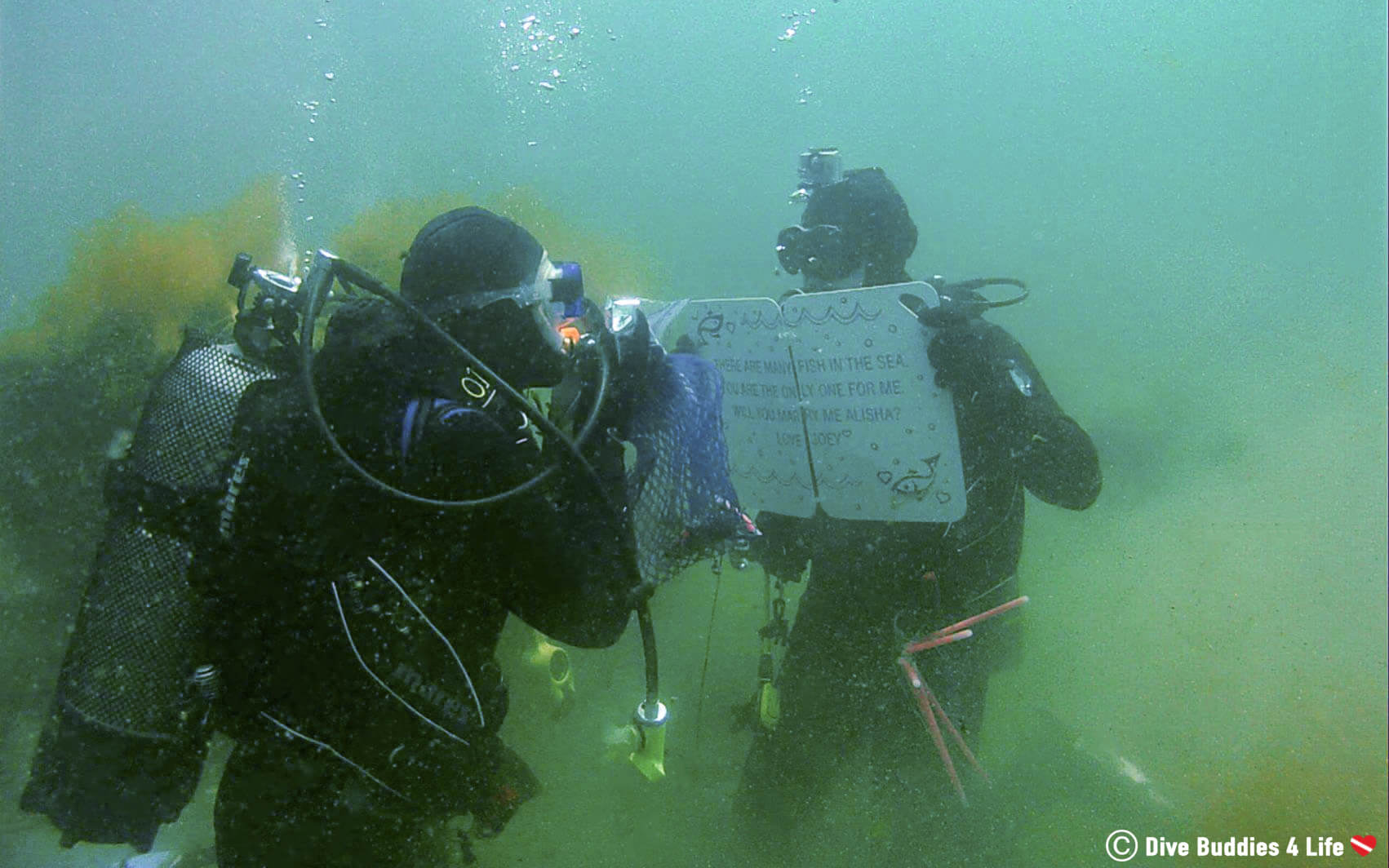 Scuba Joey Proposing To Mermaid Ali Underwater While Scuba Diving In Halifax
