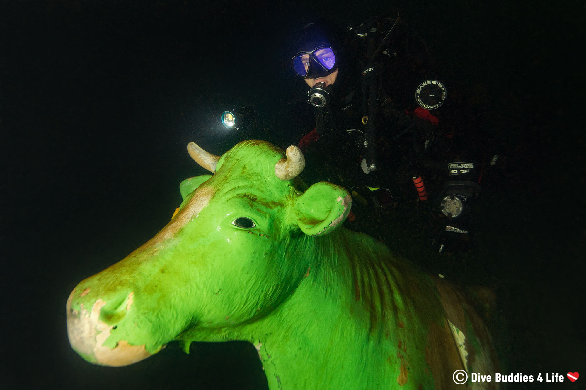 Scuba Joey And A Green Cow Underwater At The Gas O Meter In Germany, Europe