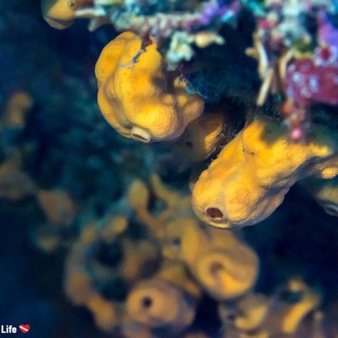 Sea Sponges Growing Along A Sea Wall On Zakynthos Island, Greece