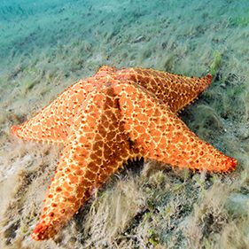 Sea Star Species in the Spotlight