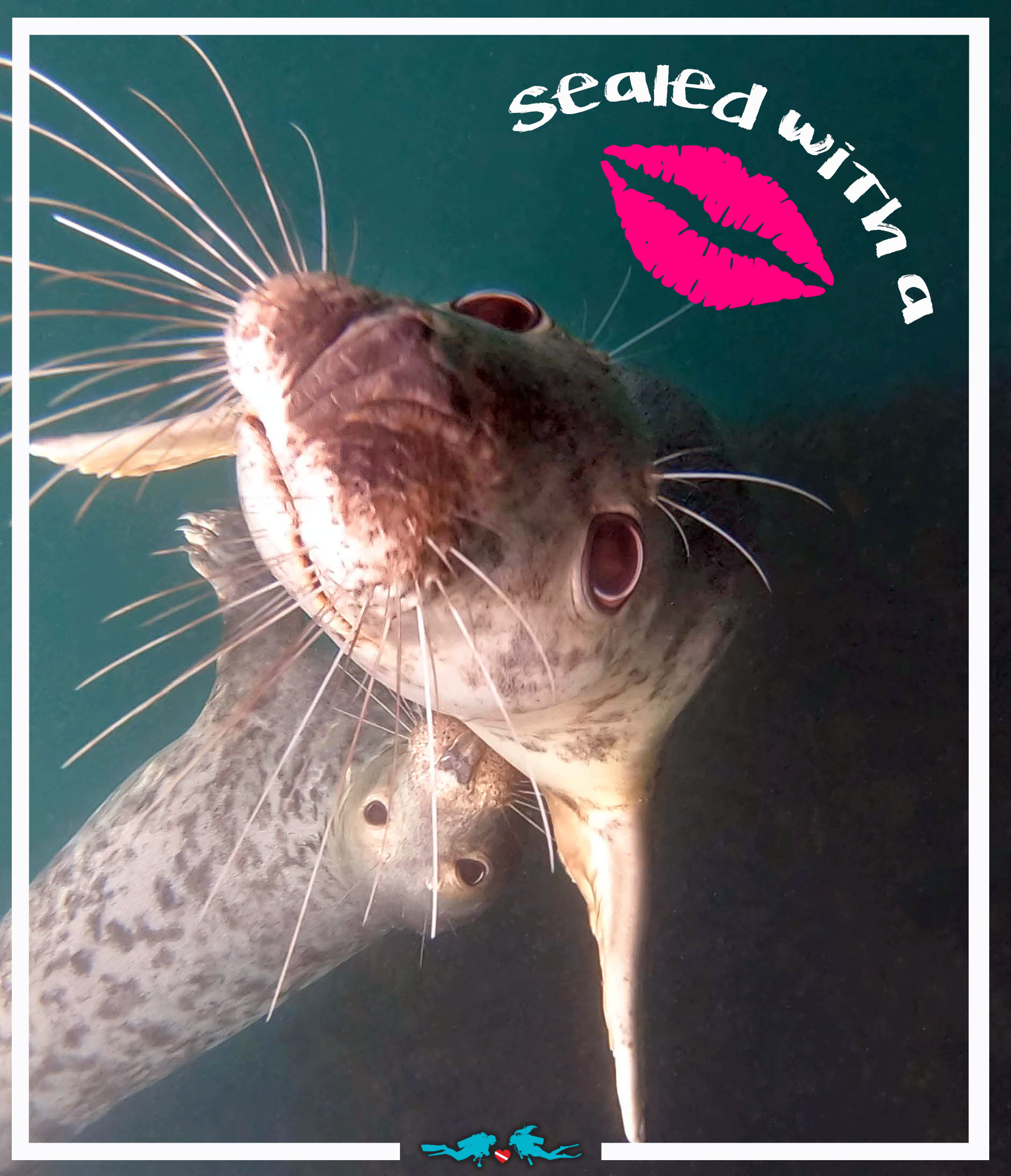 Sealed With A Kiss Valentine's Day Scuba Diving Quote