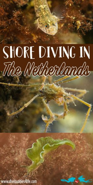 Shore Diving In The Netherlands Pinterest