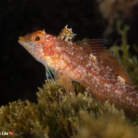 Small Costa del Sol Bottom Dwelling Fish In Spain