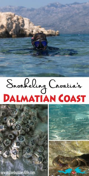 Snorkeling The Dalmatian Coast Of Croatia