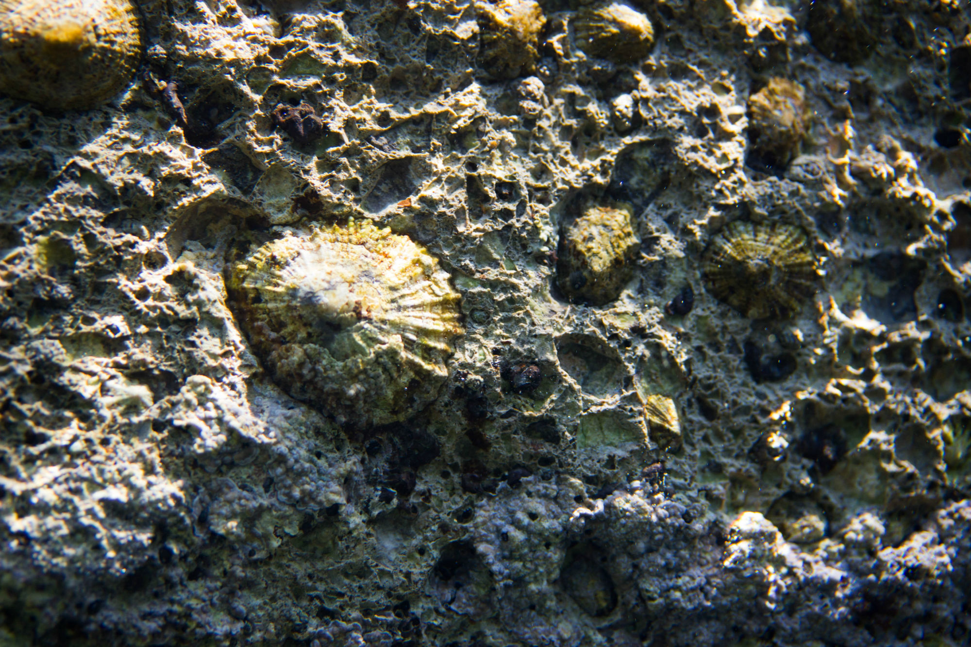Some Limpets Anchored To The Wall In Croatia