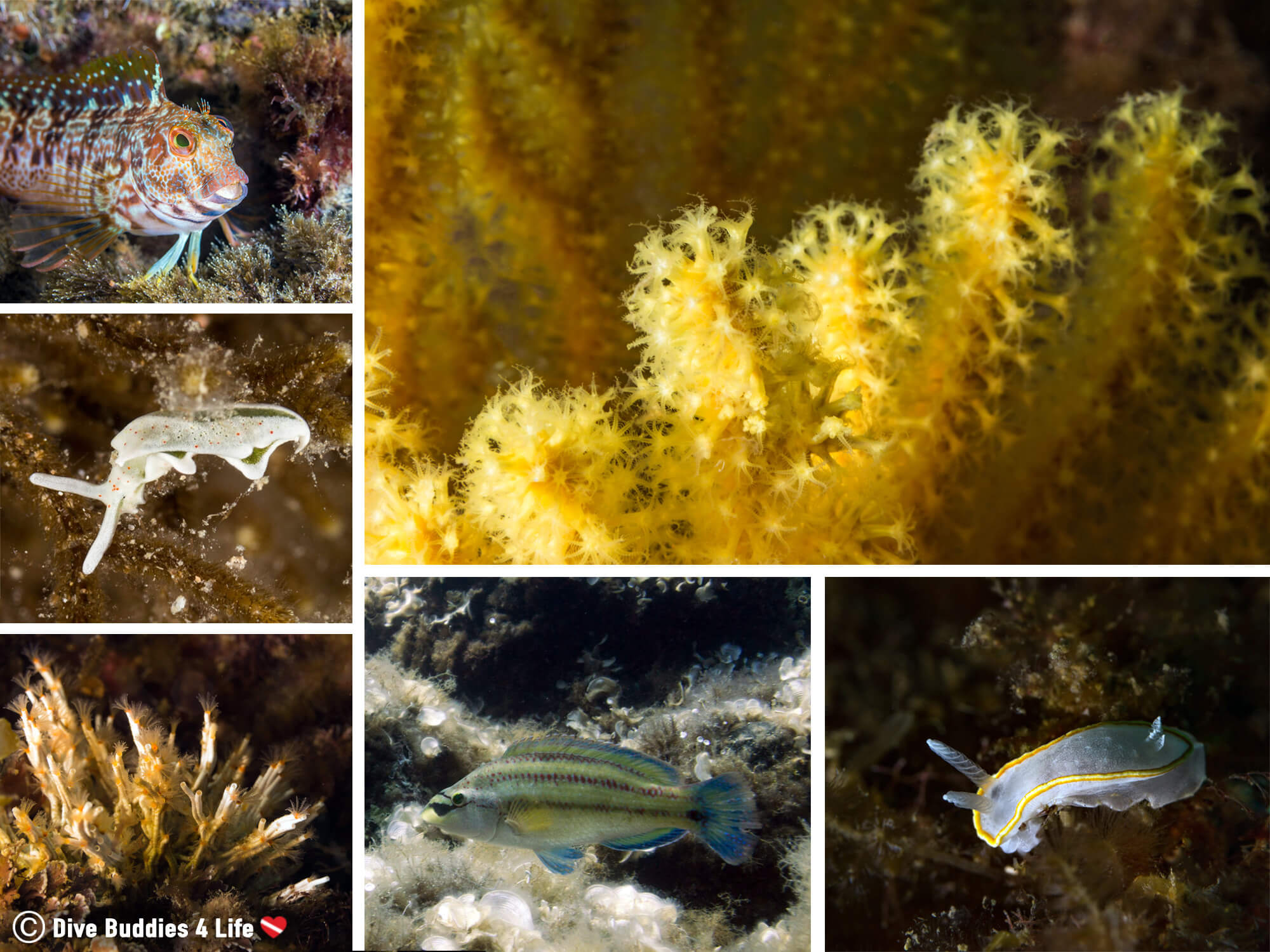 Spain's Costa Brava Underwater Marine Animals, Shore Diving Mosaic