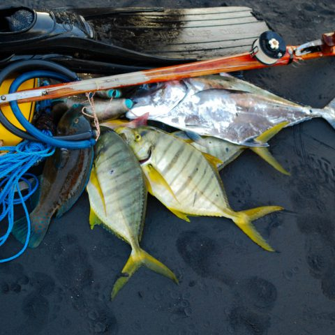 A Freediver's Spearfishing Catch in Playa Ocotal