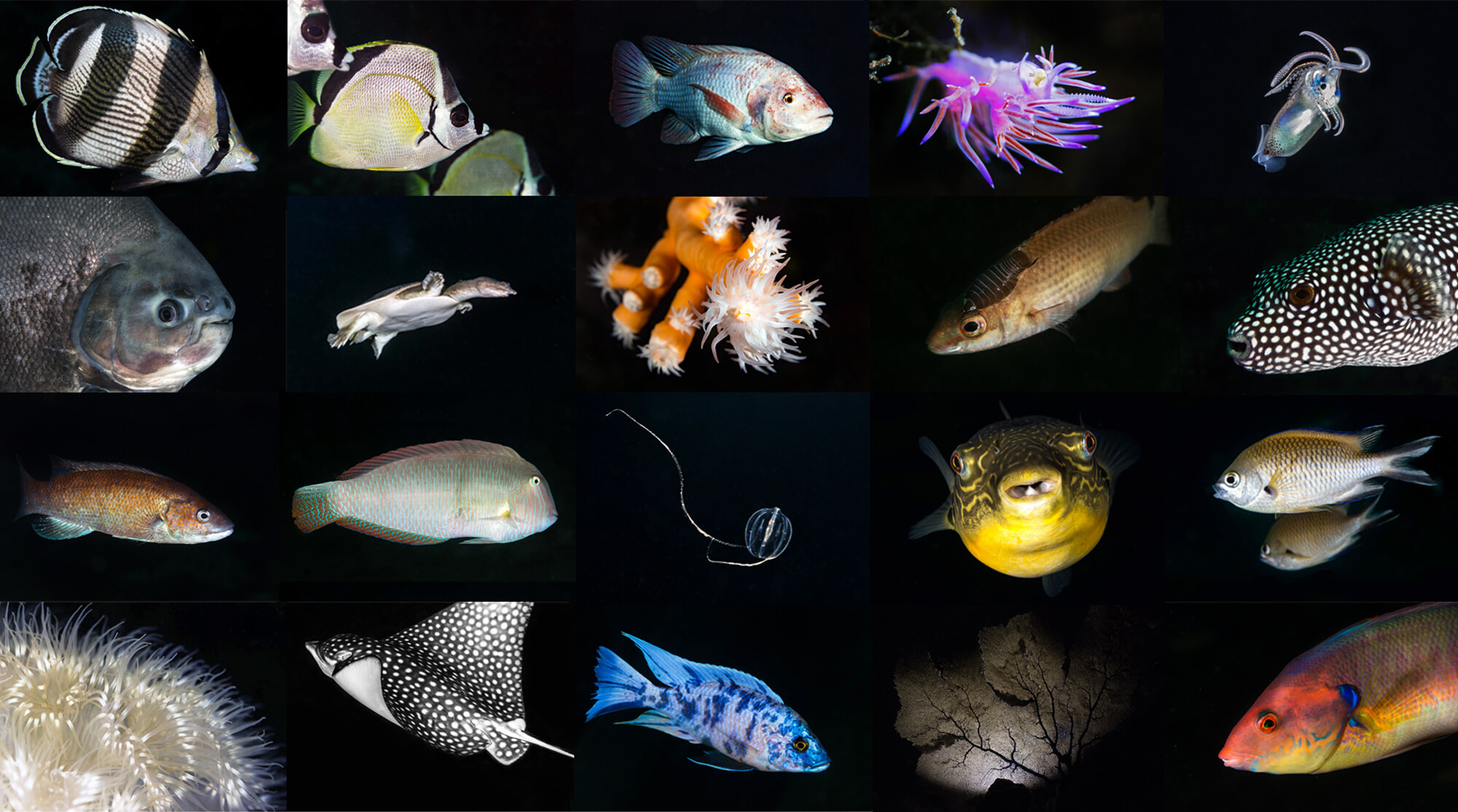 Species In The Spotlight Assortment Of Animals Image