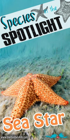 Species In The Spotlight Sea Star Pinterest
