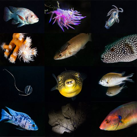 Species In the Spotlight Project Logo