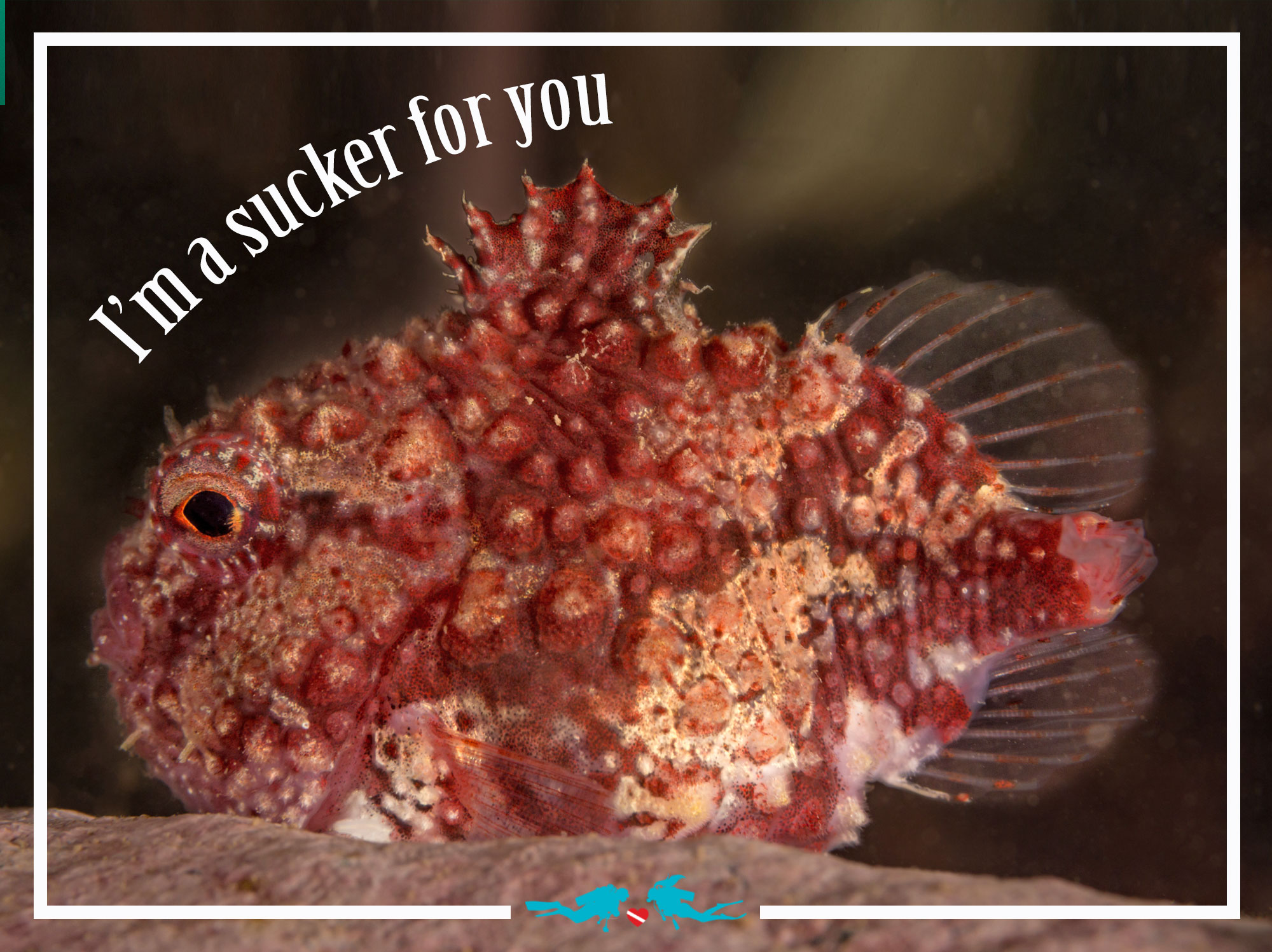 Spiny Lumpsucker Valentine's Day Scuba Diving Quote