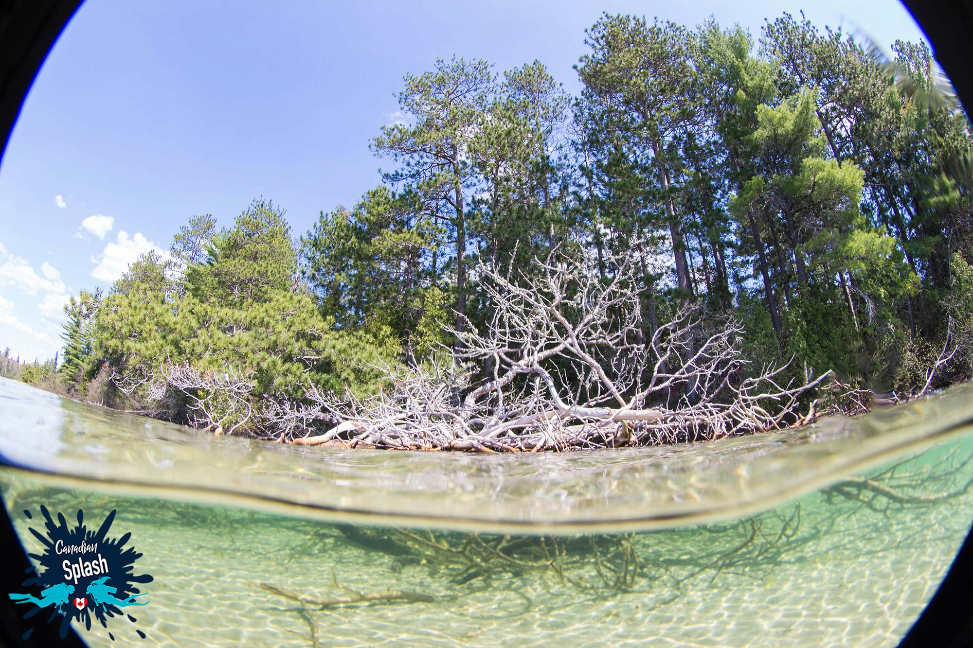 Split Shot Of A Tree Partially Submerged In The Water In Northern Ontario, Scuba Diving Canada