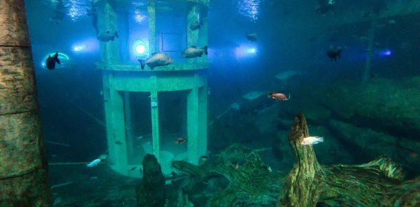TODI Aquarium Overview By A Scuba Diver Hero