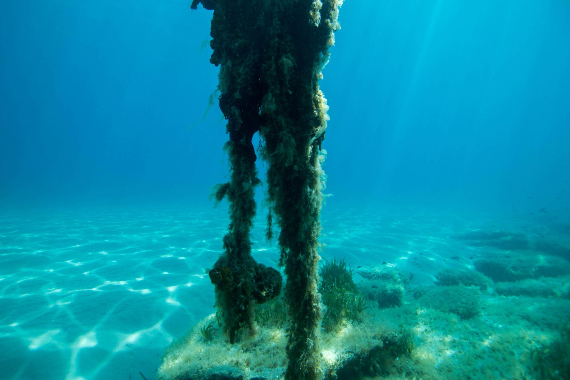 Tall Underwater Thing