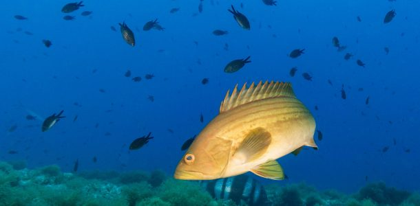 The Azure Blue Waters Of The French Riviera Filled With Fish, France, Scuba Diving Europe