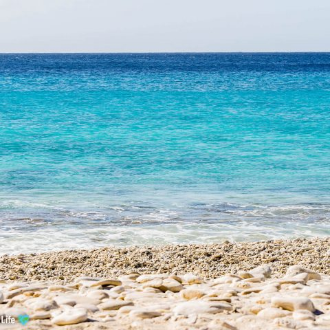 The Blue Clear Ocean Of Bonaire With Watermark, Caribbean