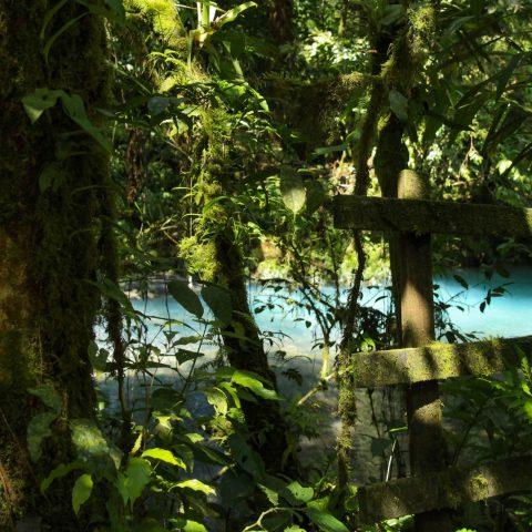 The Blue Rio Celeste River Peaking Through the Trees