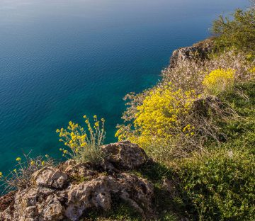 The Blue Waters and Flowered Coastline Of the Balkan Country of Albania