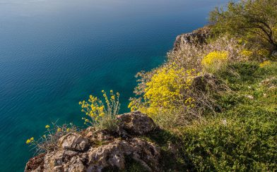 The Blue Waters Of Lake Ohrid And Some Macedonian Flowers
