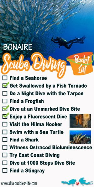 The Bonaire Scuba Diving Bucket List