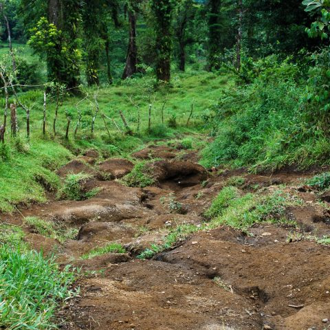 The Easy Part of the Chato Volcano Hiking Trail