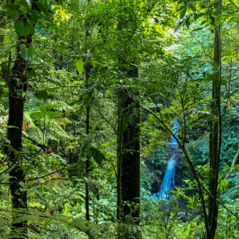 The Monteverde Jungle with a Waterfall in the Distance