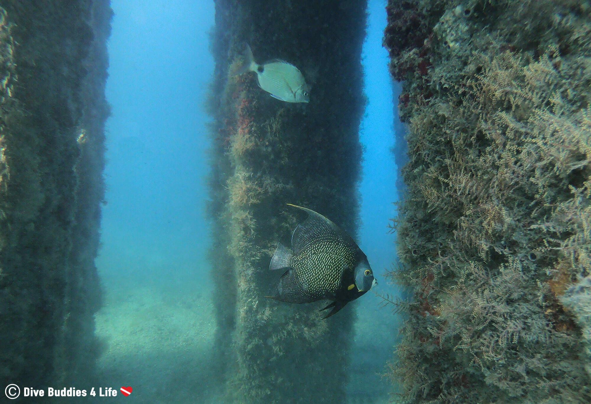 The Pillars Under Blue Heron Bridge And Some Fish In Florida, USA