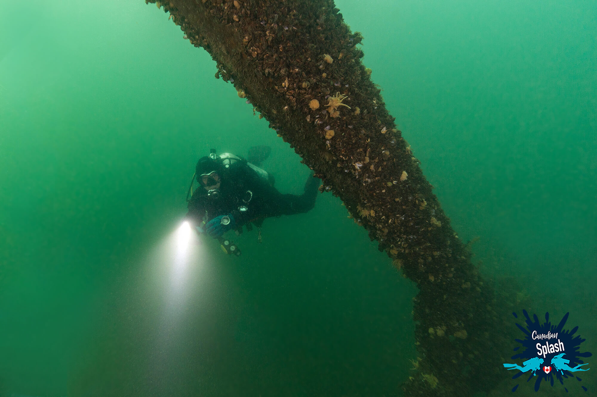 The Rich Green Plankton Filled Water Of The Saint Lawrence Seaway In Brockville, Ontario, Scuba Diving Canada