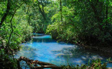 The Rio Celeste River and the Costa Rican Jungle