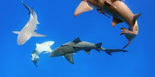The Shark Infested Waters Of Jupiter, Florida