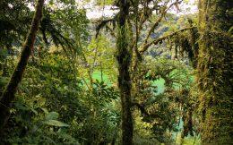 The Thick Jungle of Costa Rica