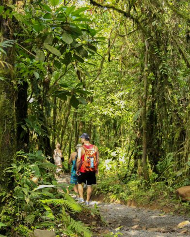 The Family Walking in the Jungle to the Rio Celeste Waterfall