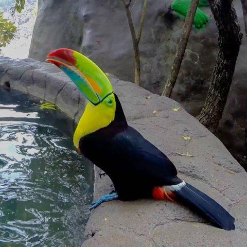 A Colorful Toucan in Costa Rica