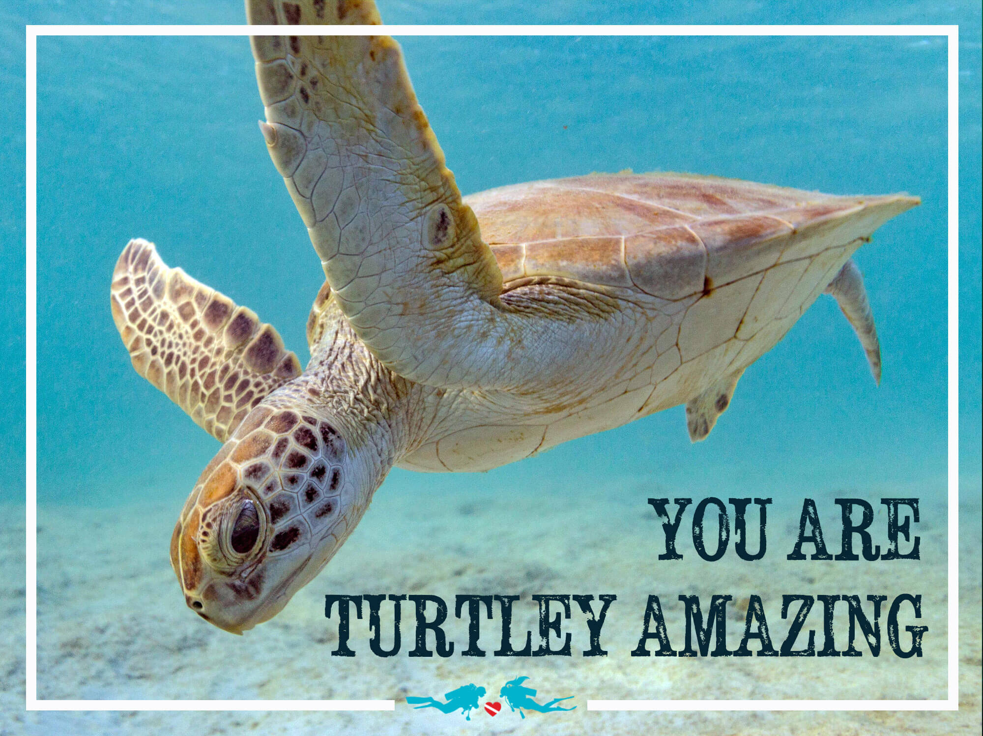 Sea Turtle Valentines Day Scuba Diving Quote