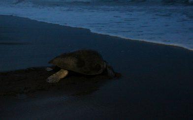 Turtle at Night
