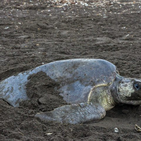Turtle with a Sandy Face