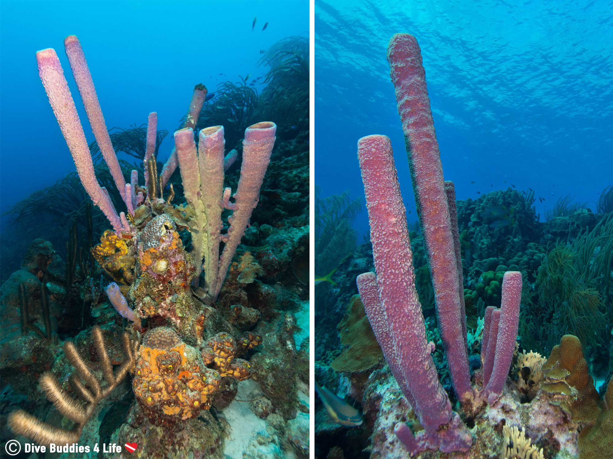Vertical Wide Angle Underwater Photo Of Some Bonaire Sponges On The House Reef, Underwater Photography Tips