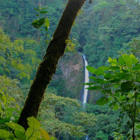 The La Fortuna Waterfall with Green Jungle Foliage