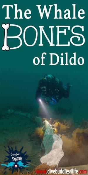 Whale Bones Of Dildo Harbour Newfoundland