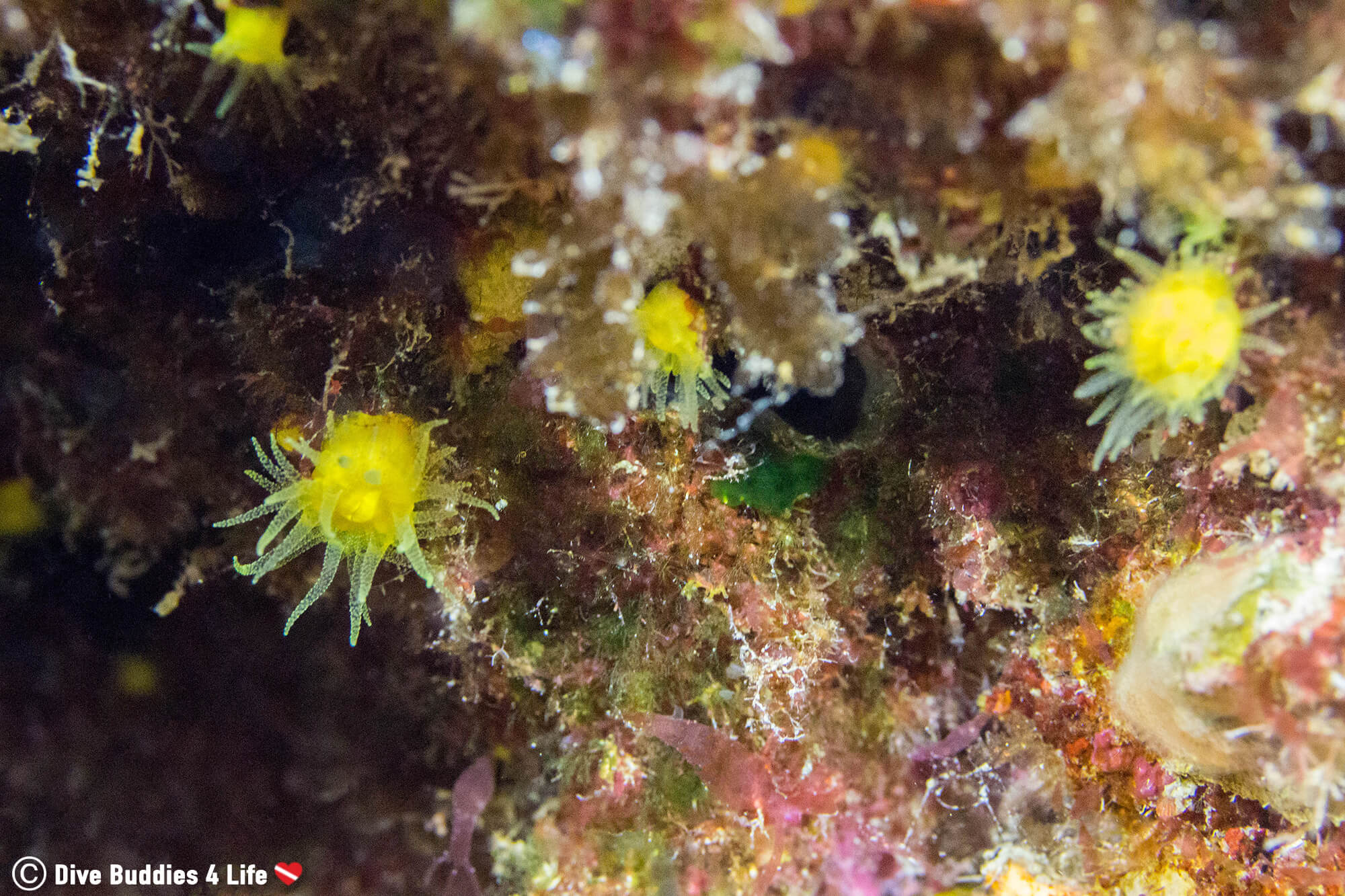 Yellow Polyps On A Rock Crevasse On Zakynthos Island In Greece, Europe