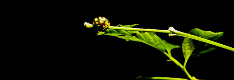 Ladybug in the Dark