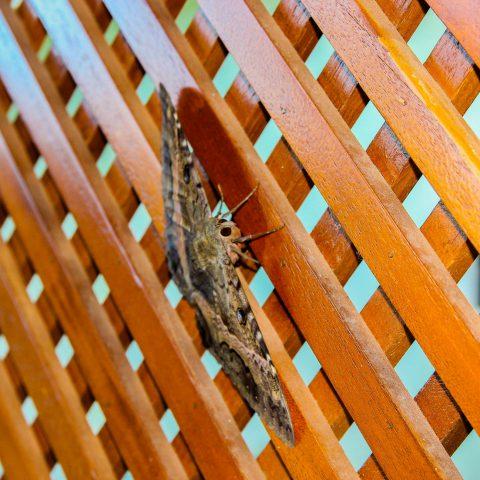 Mariposa on the Lattice