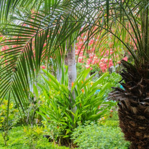 Tropical Oasis Palm Tree