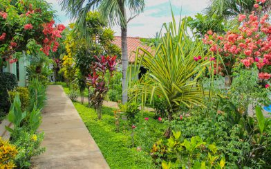 Walkway to our Tropical Oasis